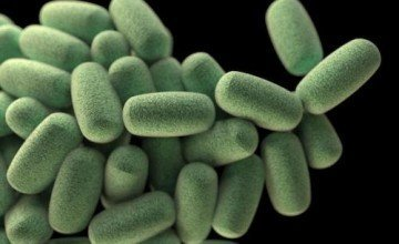 Clostridium Perfringens Analizi