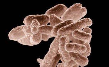 Koliform Bakteri