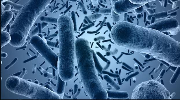 Gıdalarda Bacillus cereus Analizlerinde Doğrulamanın Önemi