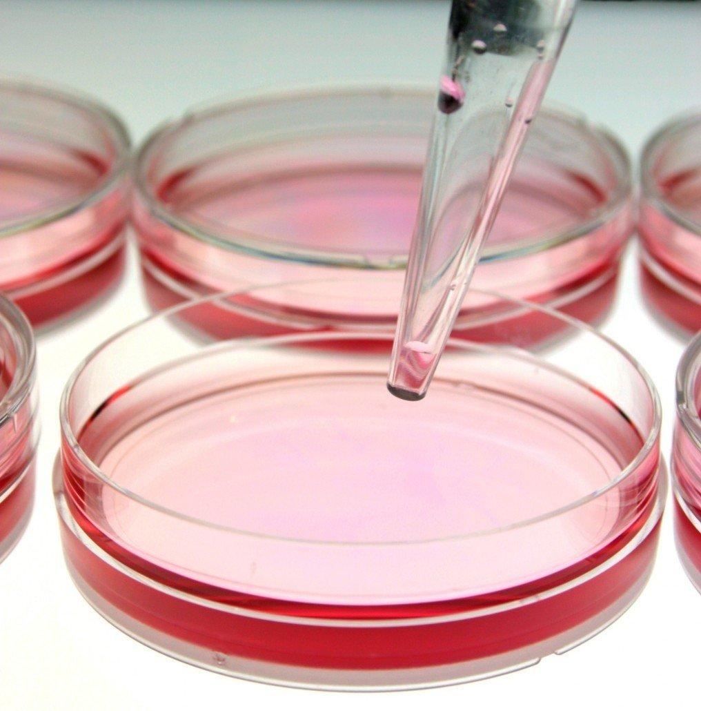 Kozmetik Ürünlerinde Koruyucu Etkinlik (Challenge) Testinin Önemi